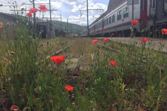Photo prise à Kinkempois par le conducteur décédé dans l'accident de train de St Georges sur Meuse pour un concours photo. Ses collègues l'ont diffusée sur les médias sociaux afin de lui rendre hommage.