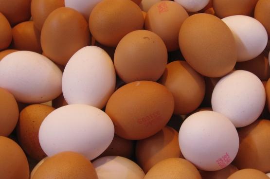 Tout indique que le Fipronil était présent dans la chaîne alimentaire depuis des mois, voire plus. (Photo 16:9clue / Flickr)